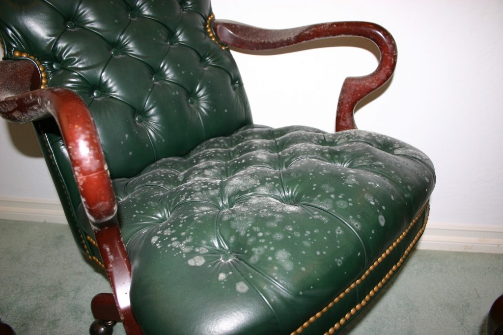 Leather Mold