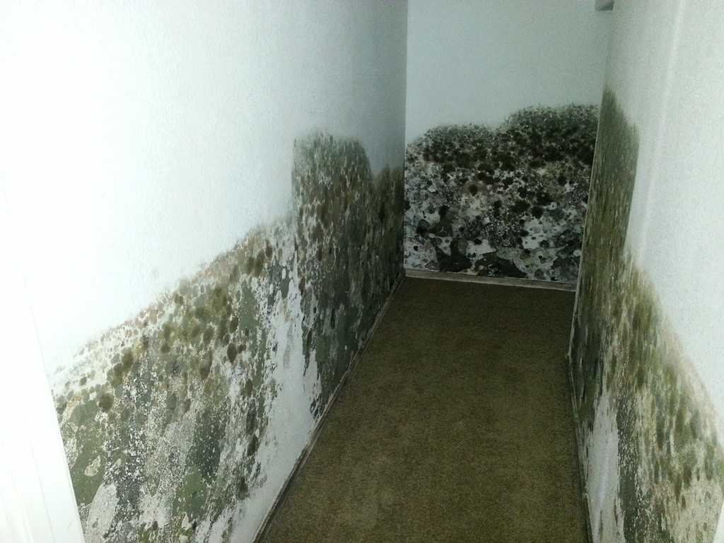 Pictures of Black Mold
