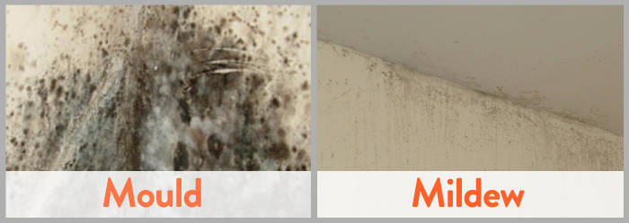 Mold vs mildew differences - How to clean black mold in bathroom ...