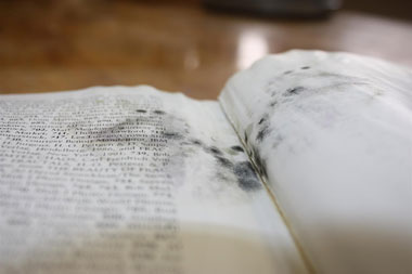 mold in books