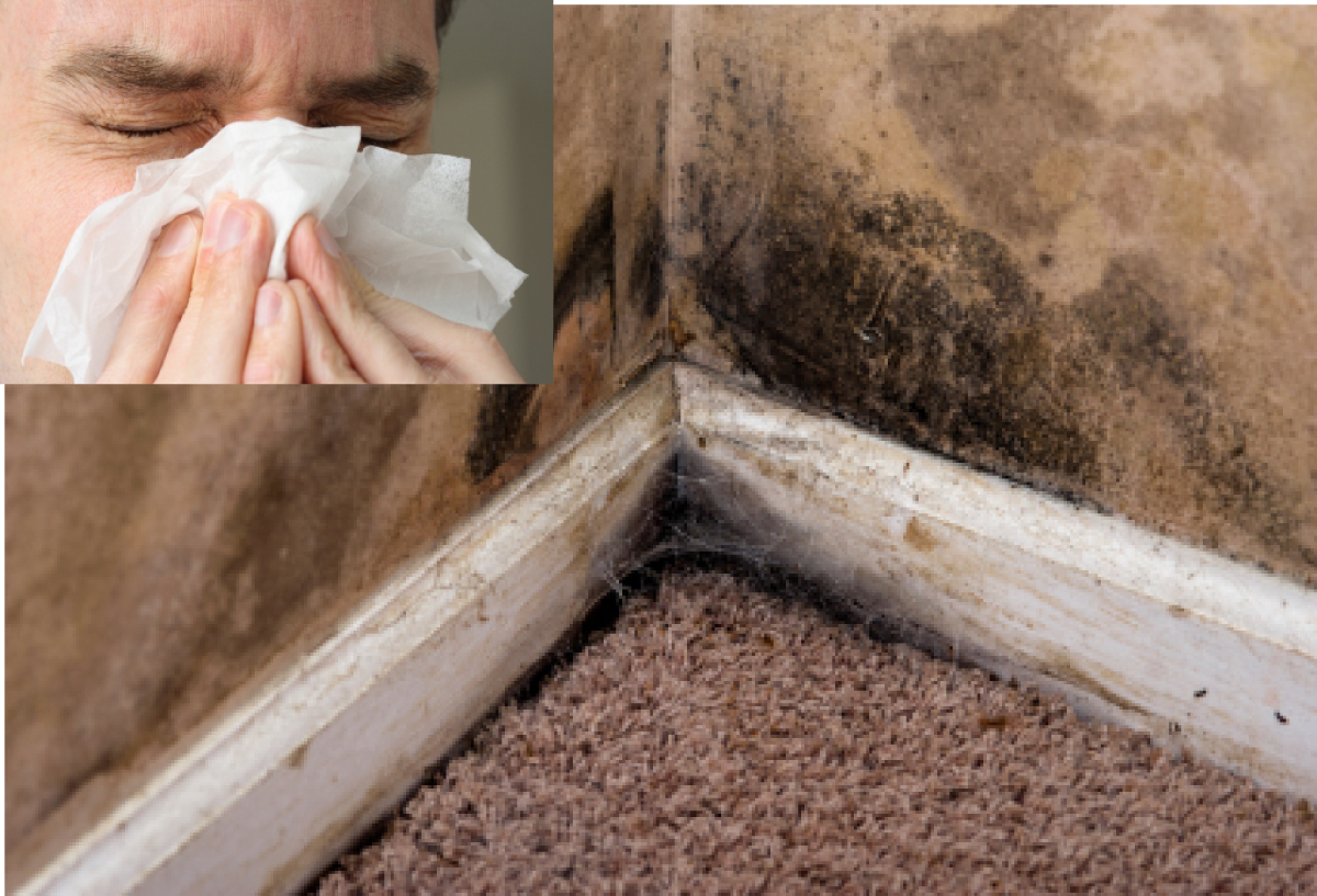 Mold Tips Design Ideas