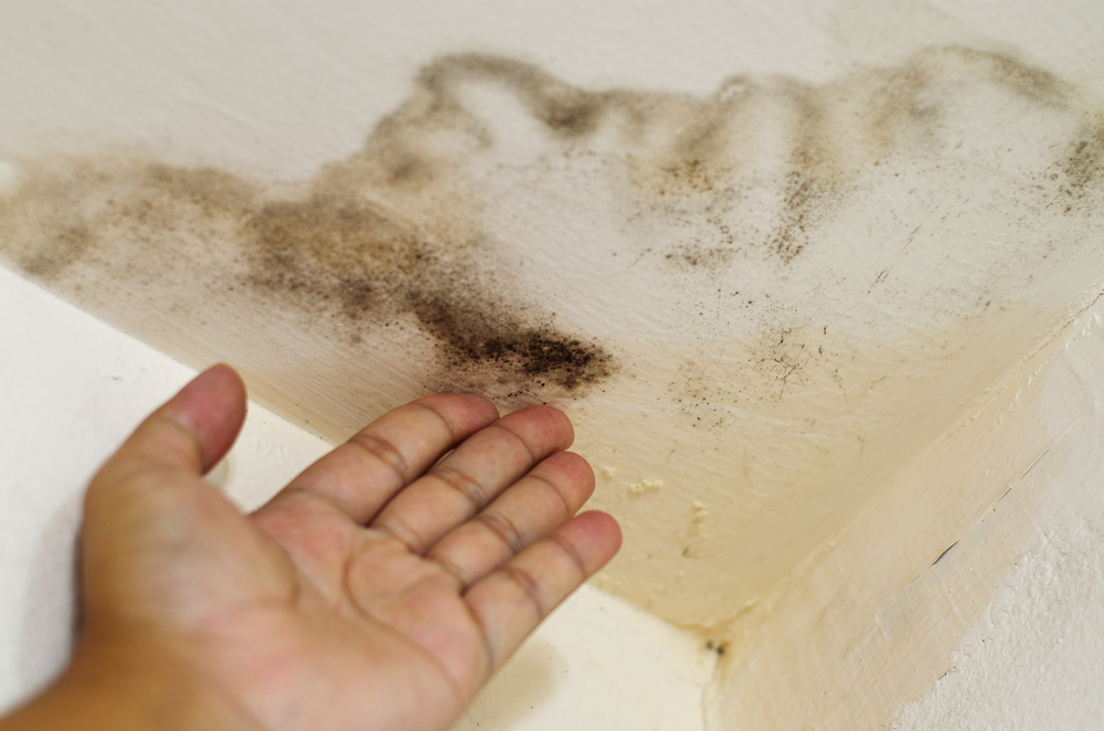 House Mold – The Basics