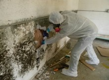 Mold-Removal-Remediation