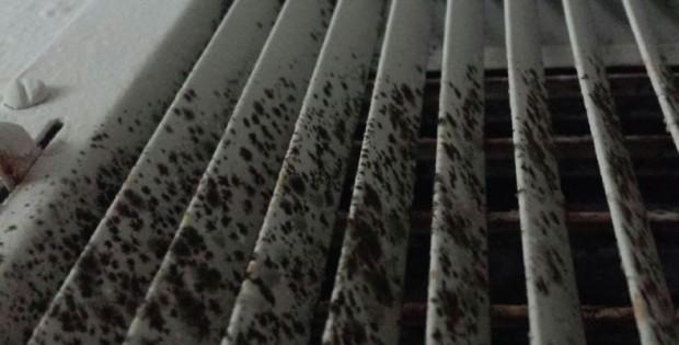 Mold in Ac HVAC