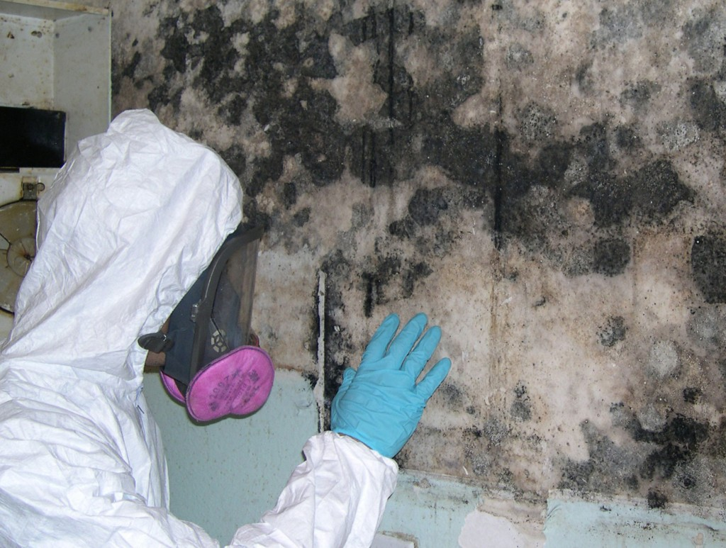 Get Quality Mold Remediation in Chicago