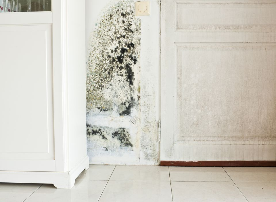 How to Prevent Mold from Damaging Your Doors