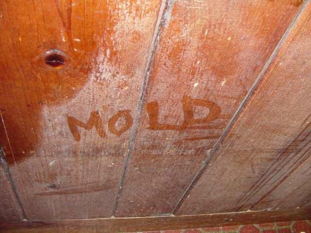 mold dust