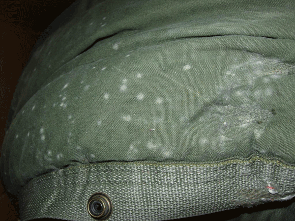 mold on clothing