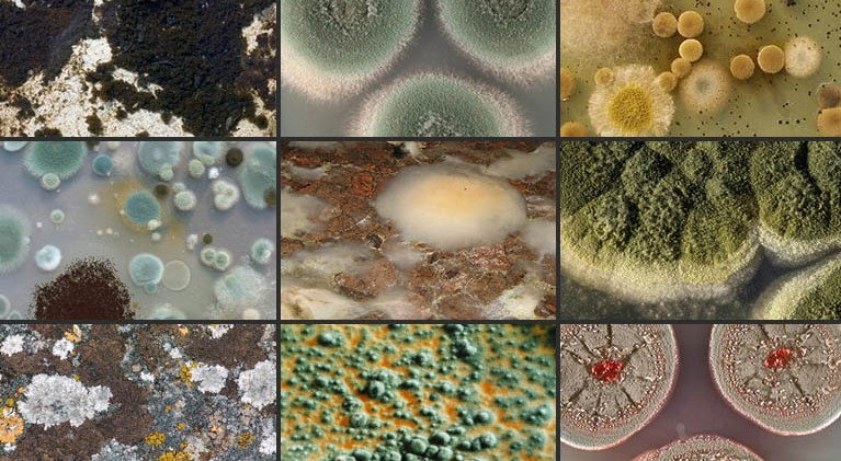 Mold Types Found Homes