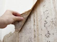 wallpaper-mold