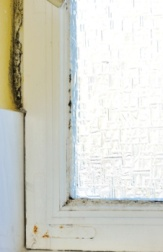 black-mold-window