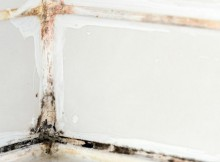 mold sealant
