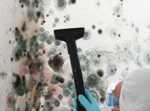 Diy mold removal