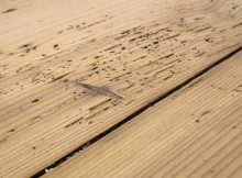 woodworm1