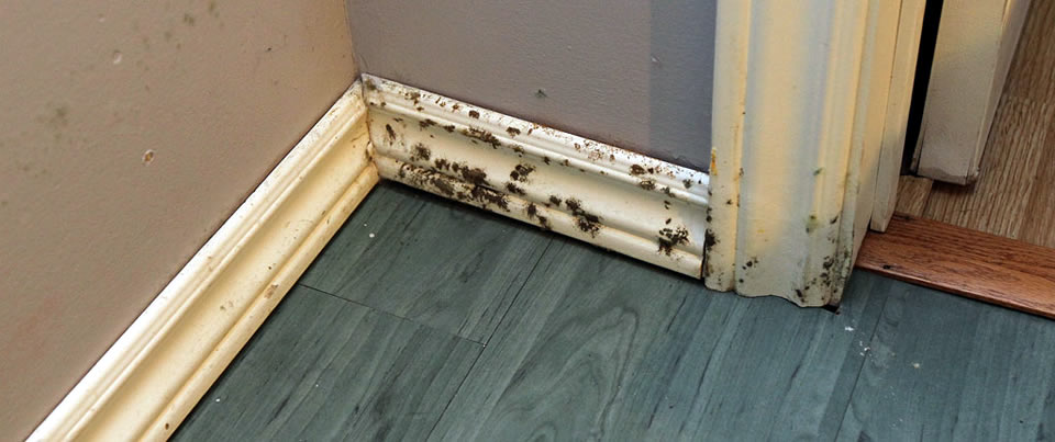 Fed Up Of Mold? Here Is How to Overcome the Problems!