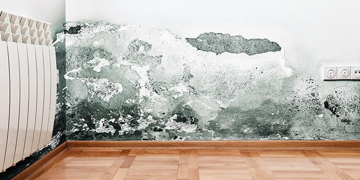 Tips on Mold Removal in the Bedroom That You Can Follow