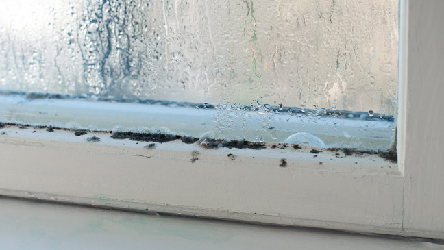 Is mold bad for your windows?
