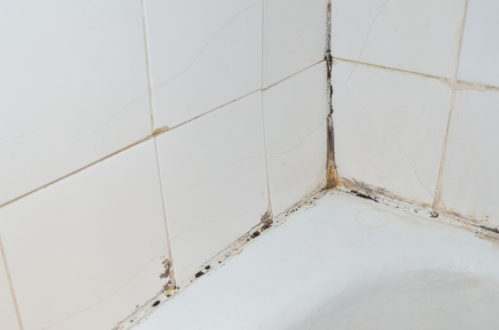 Here's Why Mold Appears In Your Bathroom