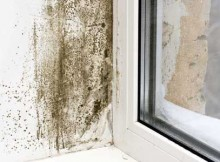 mold-prevention-windowFULL.jpg.560x0_q80_crop-smart