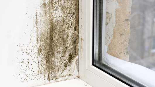 Smart Ways to Prevent Mold Problems Around the House