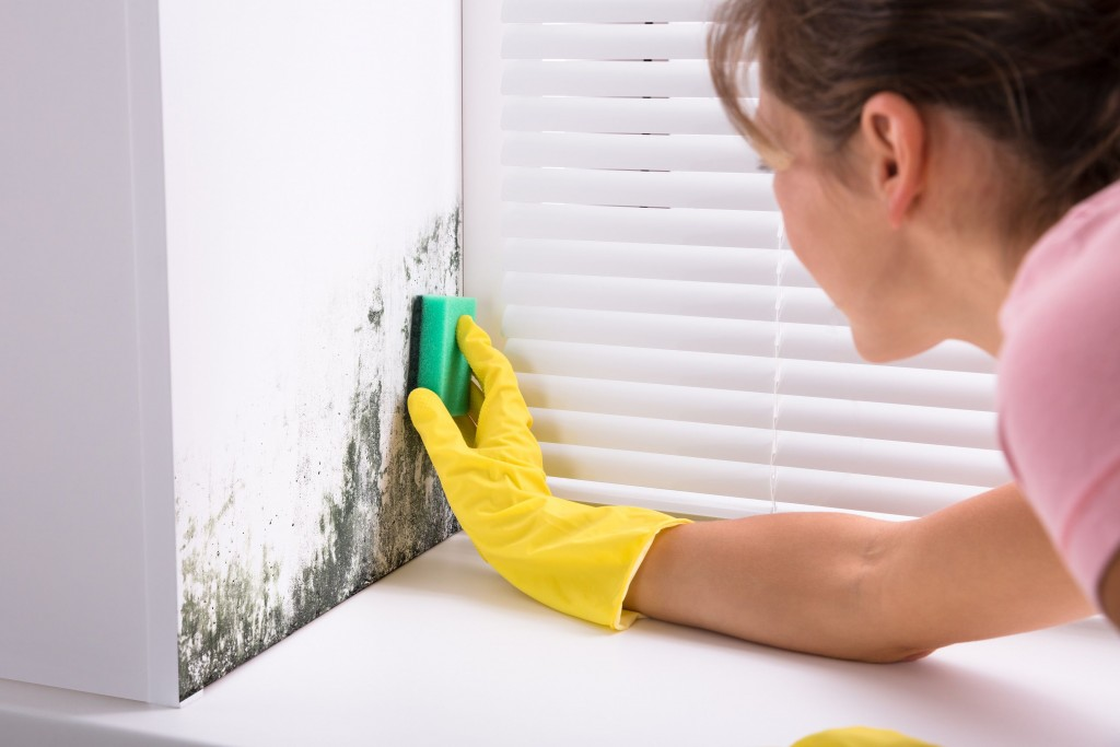 Can You Clean Up Mold Yourself?