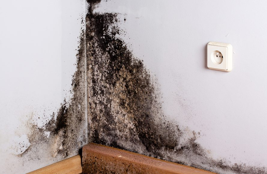Everything Homeowners Need to Know About Black Mold